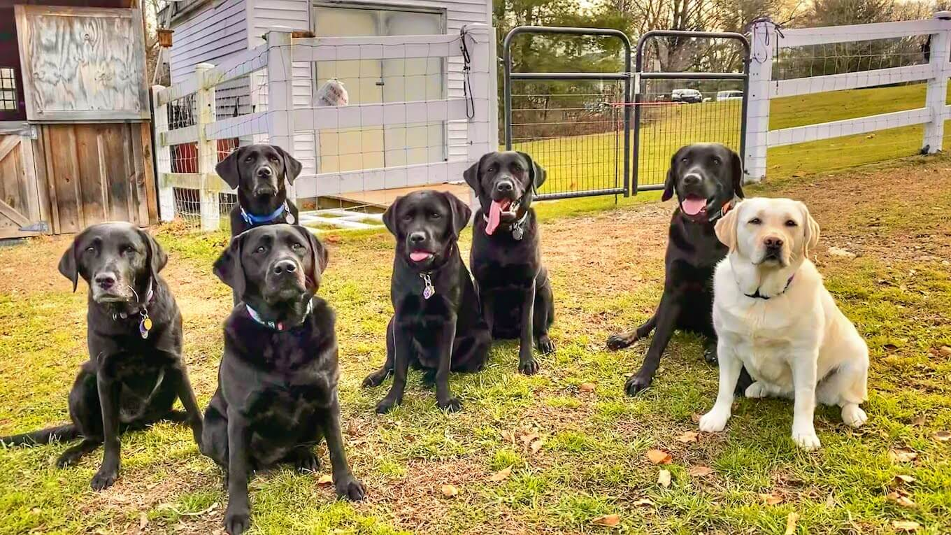 a photo of 7 dogs, all looking at the camera - captured with burst photos on iPhone