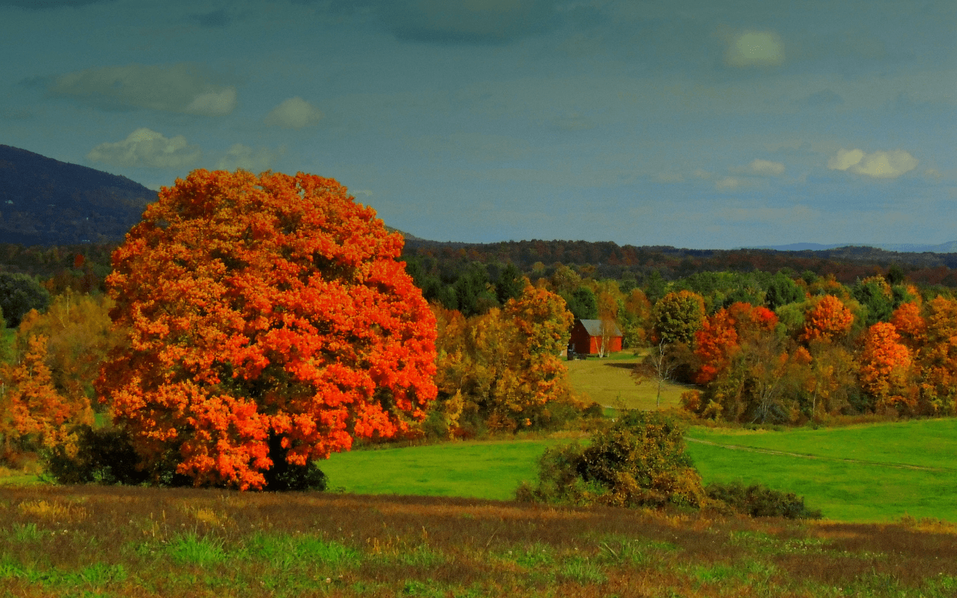 A photograph of a single orange maple tree in a field, demonstrating the rule of thirds in photography.