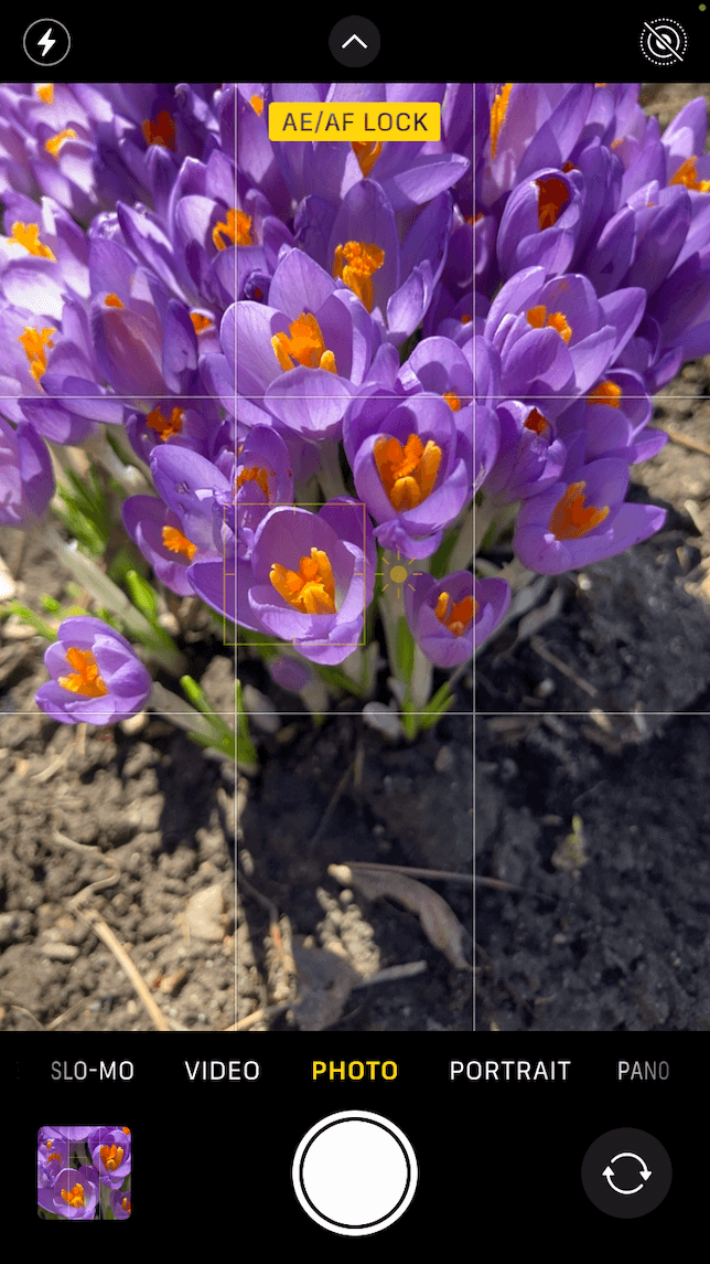 A screenshot showing how to capture great close-ups with an iPhone camera: first view.
