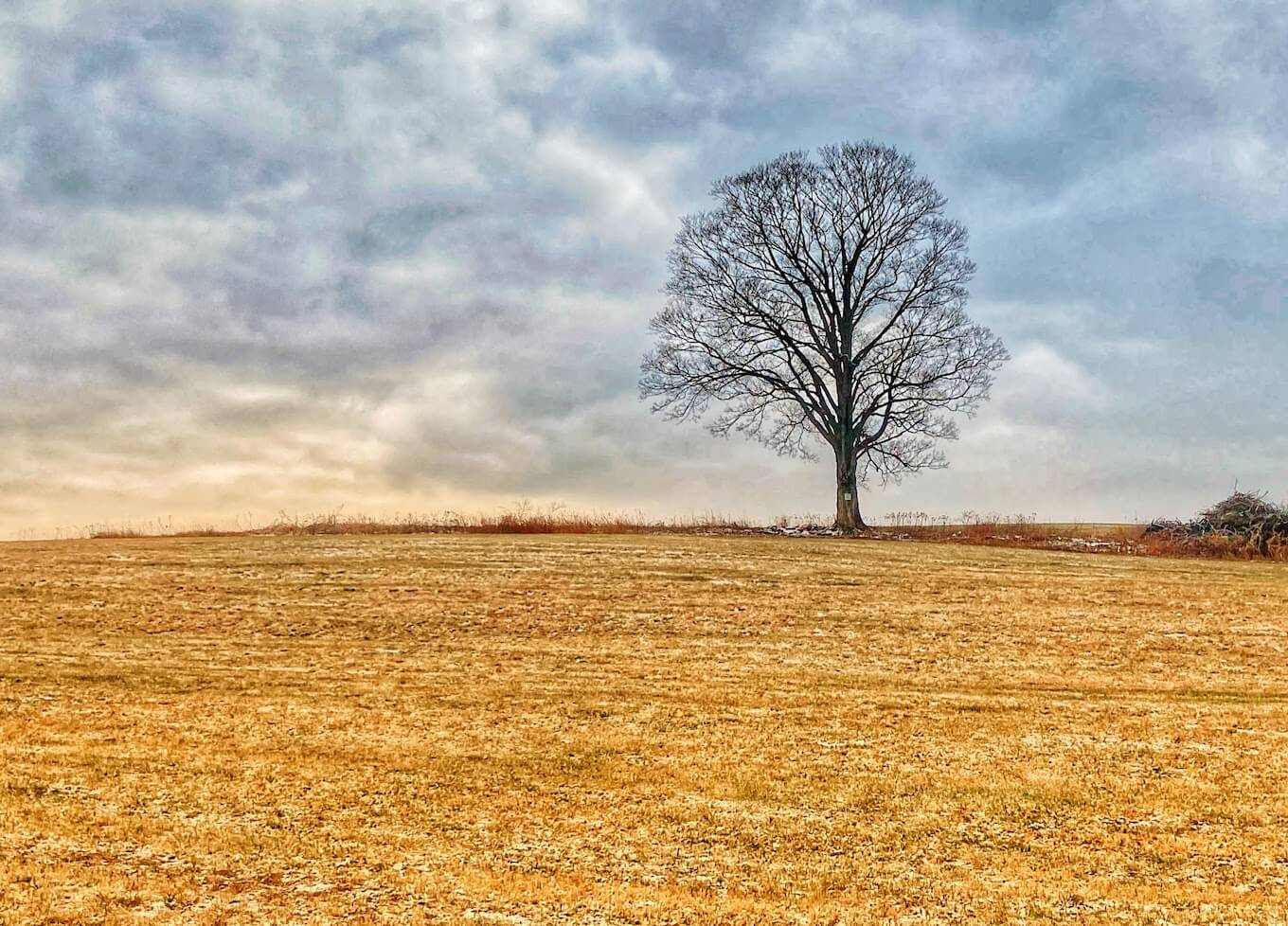 A photo of a lone tree in a field, used to demonstrate negative space in photography.