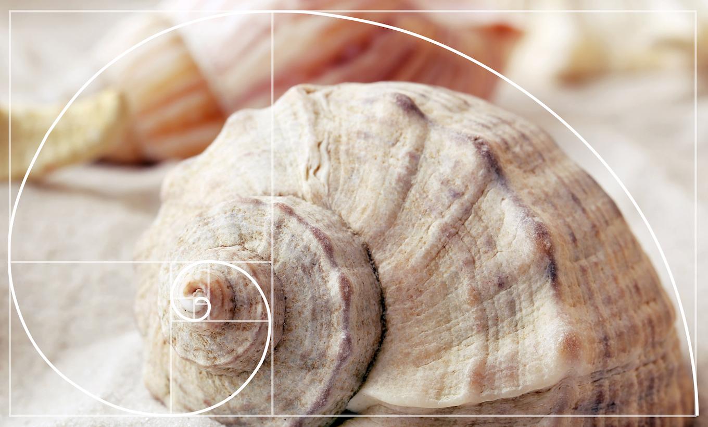 Example of the Fibonacci spiral in nature