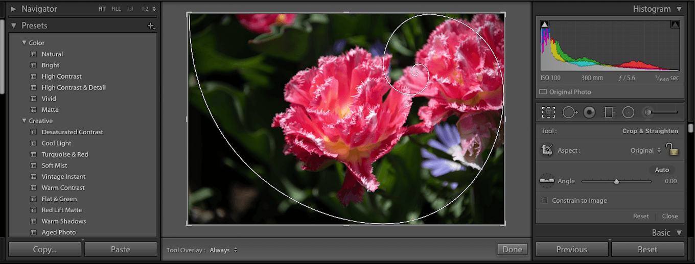 Screenshot showing how to crop your photo using the golden ratio with Lightroom.