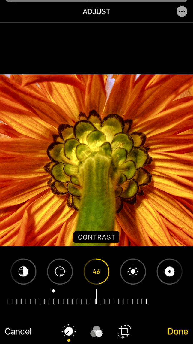 A screenshot of a flower to show how to add contrast to a photo in the iPhone Photos app.