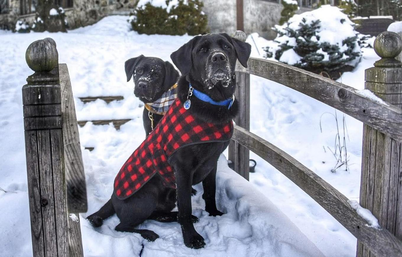 A pet photo of two black dogs sitting in the snow wearing coats.